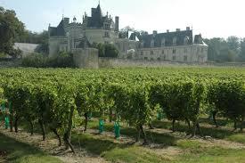 Top 3 des vignobles à Saumur